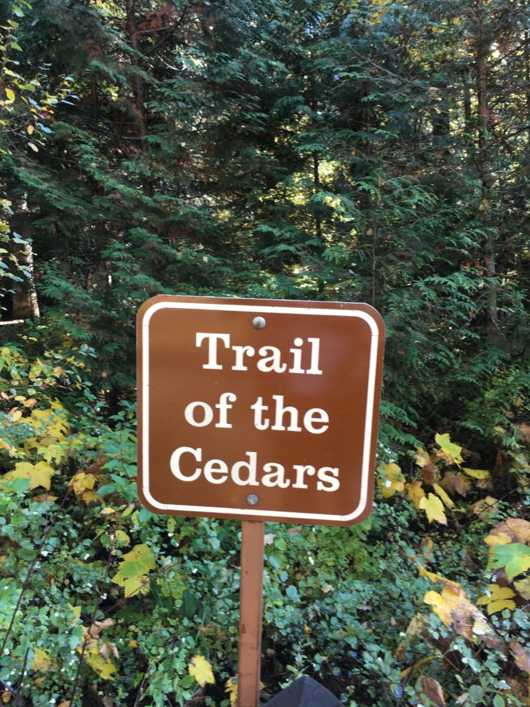 Trail of the Cedars Glacier National Park @montanahappy.com