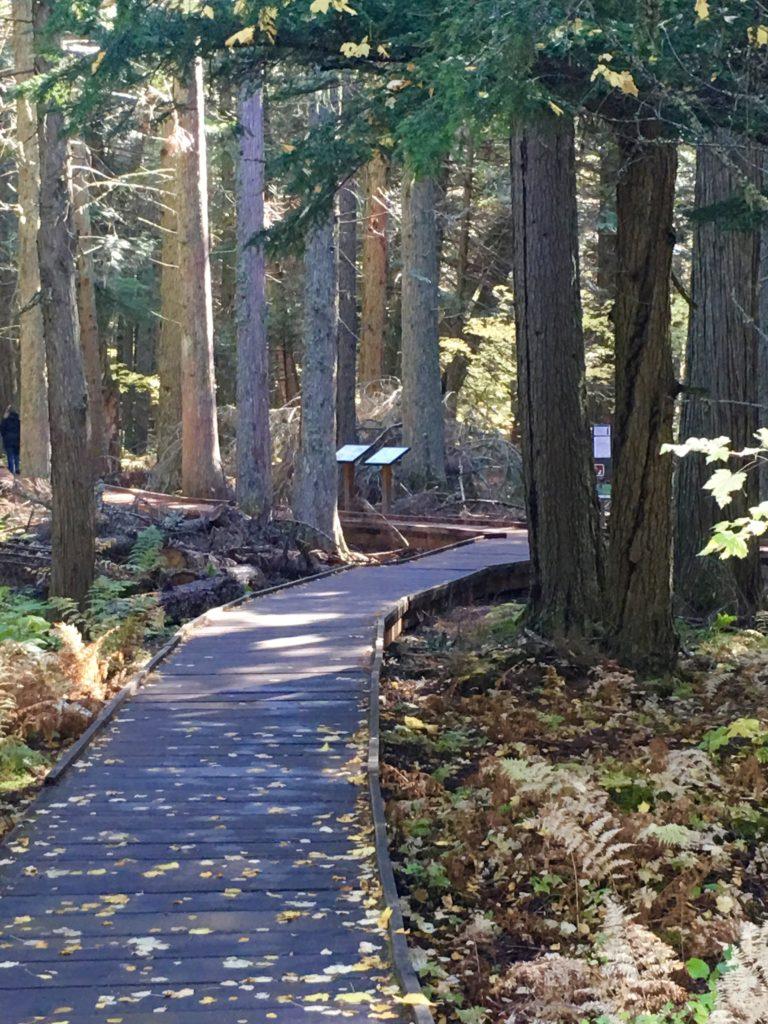 Trail of the Cedars Glacier National Park @montanahappy.com