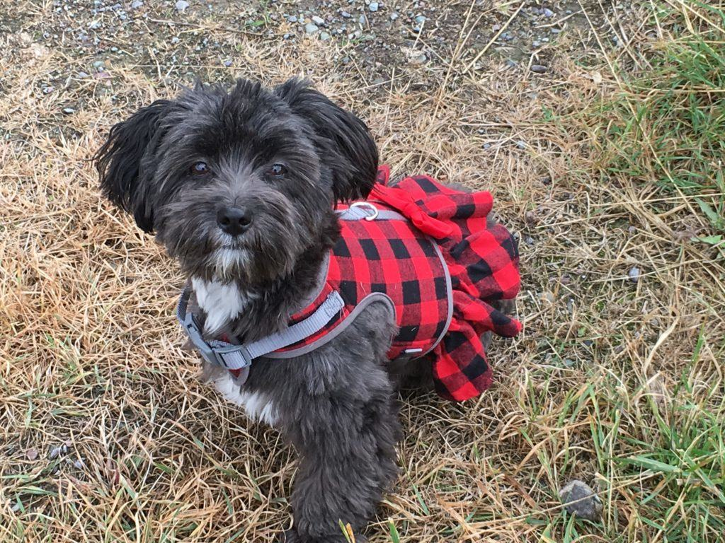 Grayson in her Tartan Dress @montanahappy.com