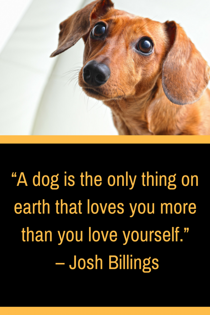 11 best dog gifts to give your four legged friend montana happy since theres no reason to keep you in suspense heres the list of the best dog gifts to give your four legged friend solutioingenieria Choice Image