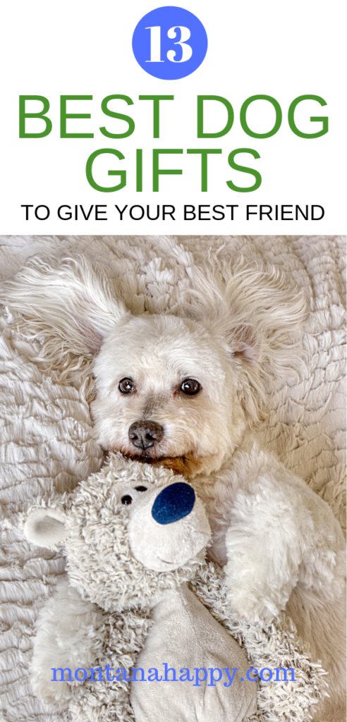 13 Best Dog Gifts to Give Your Best Friend