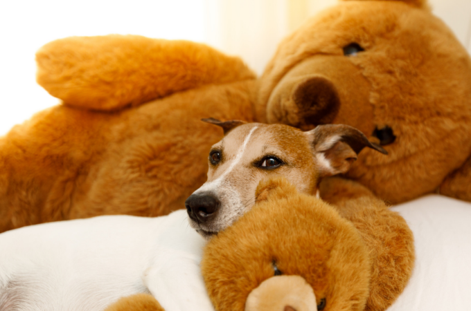 13 Dog Gifts to Give Your Best Friend