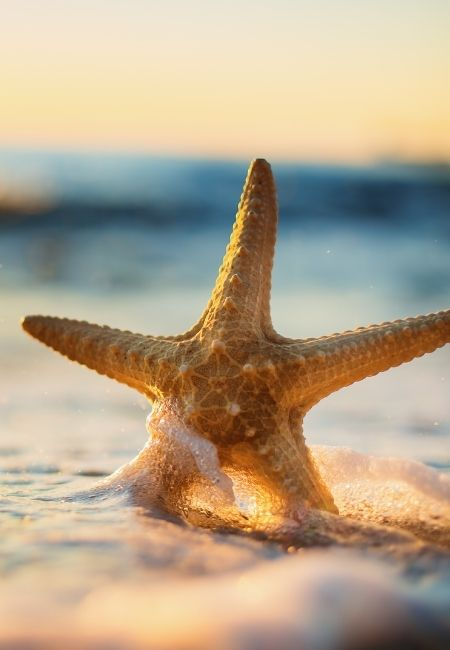 Starfish standing up in water at the beach in summer