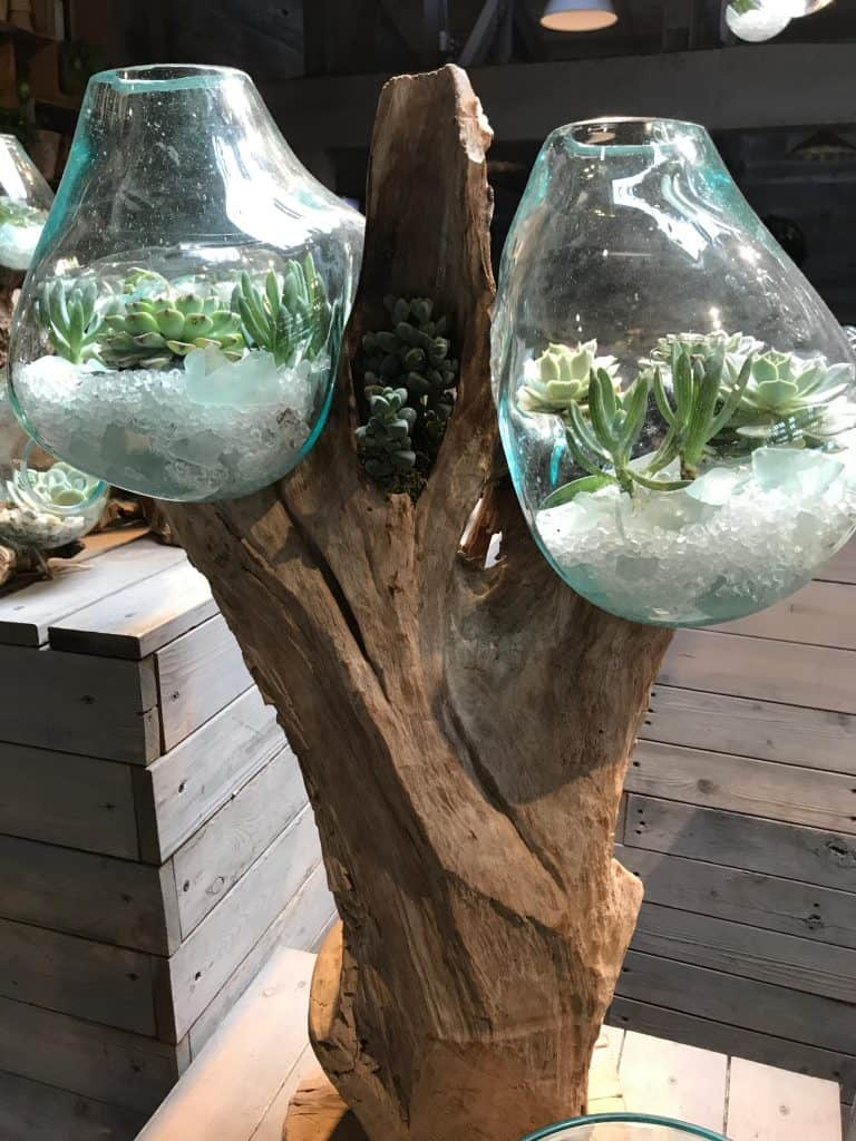 Beautiful and Creative Display Ideas for Succulent Plants
