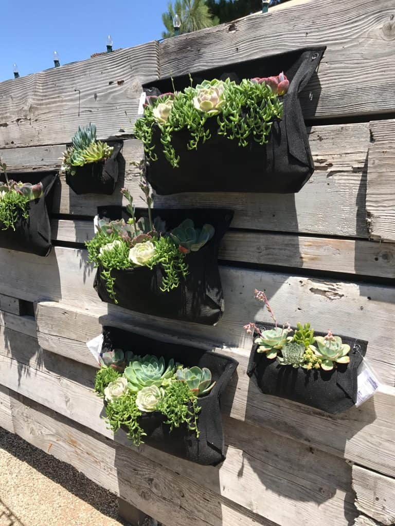 Beautiful and Creative Ways to Display Succulent Plants
