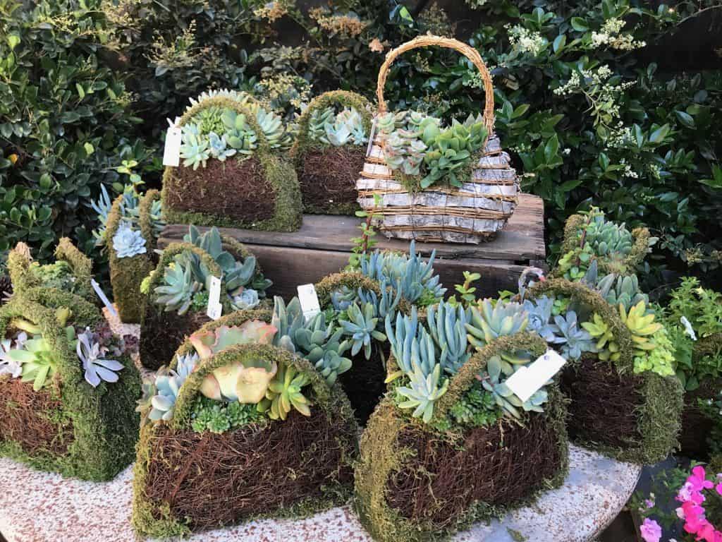 beautiful and creative ways to display succulent plants montana