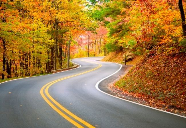 Winding road among fall trees