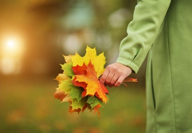 Hand holding a bouquet of fall leaves