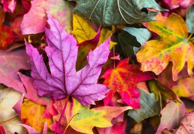 Hygge Fall Images - Close-up of autumn leaves