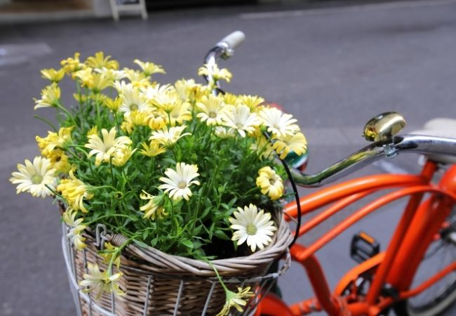Orange Vintage Bicycle with Flowers in the Basket