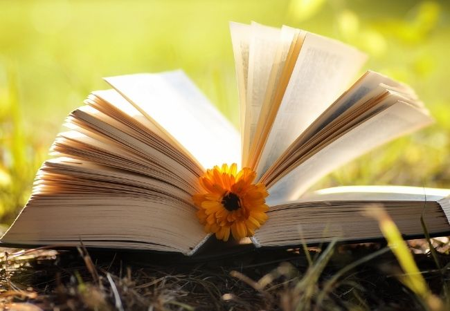 Open book with a Flower in the Grass