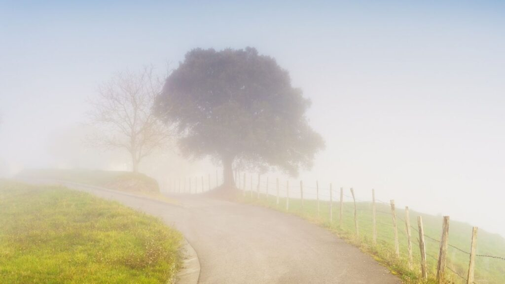 Cozy Morning Country Road with Fog
