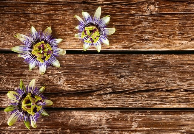 Three passion flowers on a rustic wood backdrop