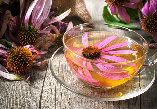 Echinacea flower tea from garden tea
