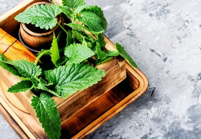 Fresh lemon balm in rustic wood containers