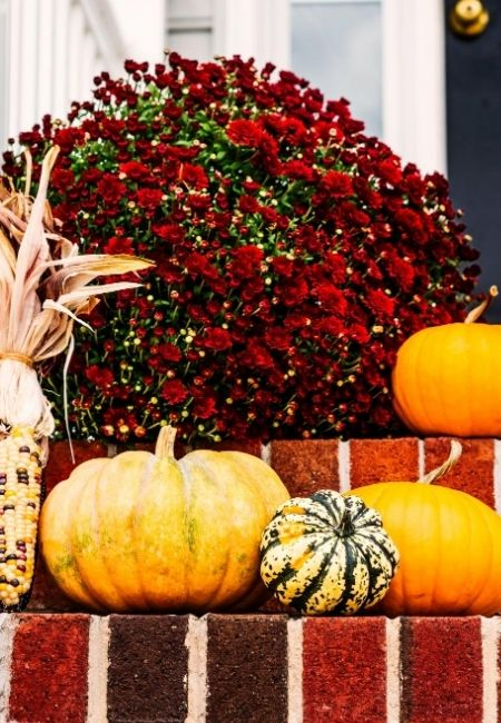 Brick front porch steps decorated with fall flowers and pumpkins