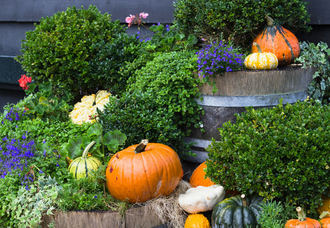 Simple Ways to Use Pumpkins, Squash and Gourds for Fall Decor
