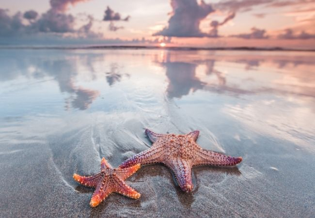 Two starfish on the beach with the sky in the background