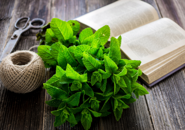 How to Grow a Mint Garden * Whether you're growing mint indoors or outdoors, in pots or in your garden you'll find ideas on how to grow this versatile herb.