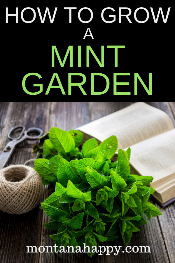 How to Grow a Mint Garden