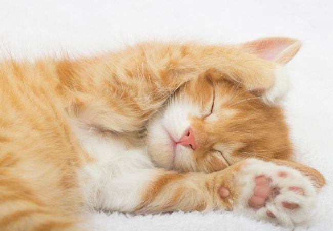 200 Simple Things to Be Grateful For - ginger kitten sleeping