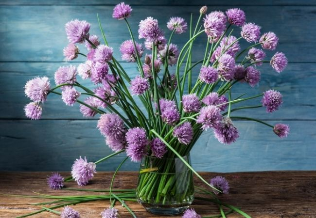 Chive flowers in a clear vase against a blue background