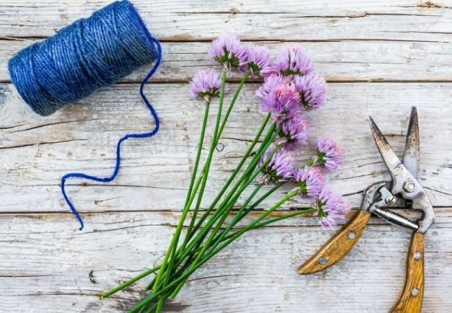 Chive flowers on a white rustic background with blue string and shears
