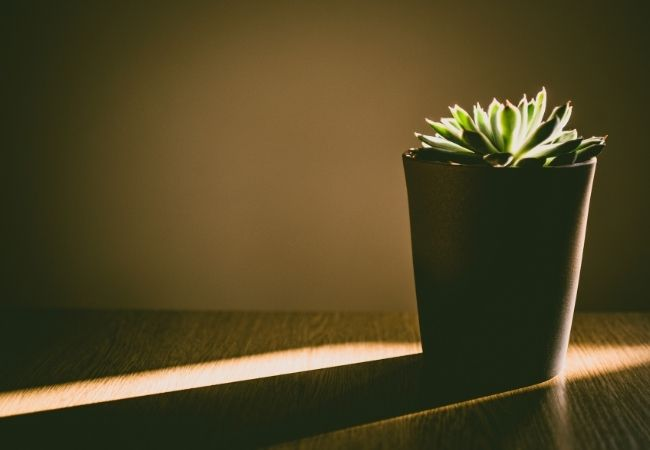 Minimalist Decor - succulent plant in the morning light