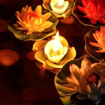 Rose-shaped candles floating in water with water lilies at night