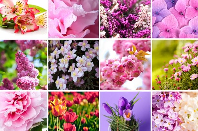 Best Cottage Garden Flowers to Grow