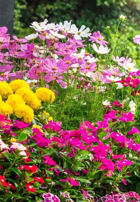 A variety of Cottage Garden Flowers