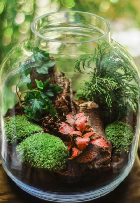 Large Clear Glass Jar with Terrarium inside