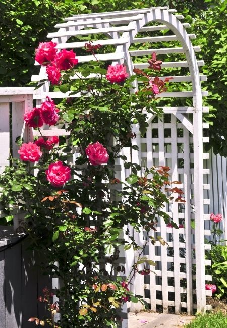 Rose Growing Ideas - Rose Covered Arbor