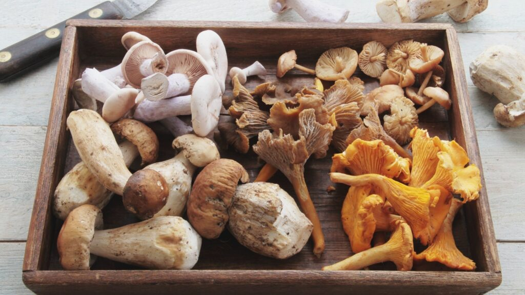 A wooden box filled with a variety of fresh mushrooms.