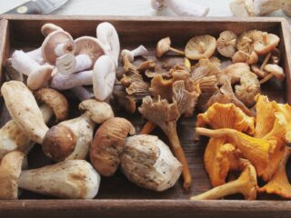 Wooden box of a variety of mushrooms