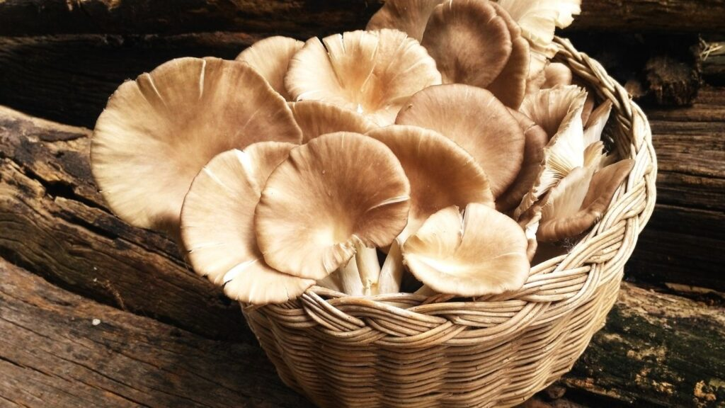 Oyster Mushrooms in a basket on a rustic surface.