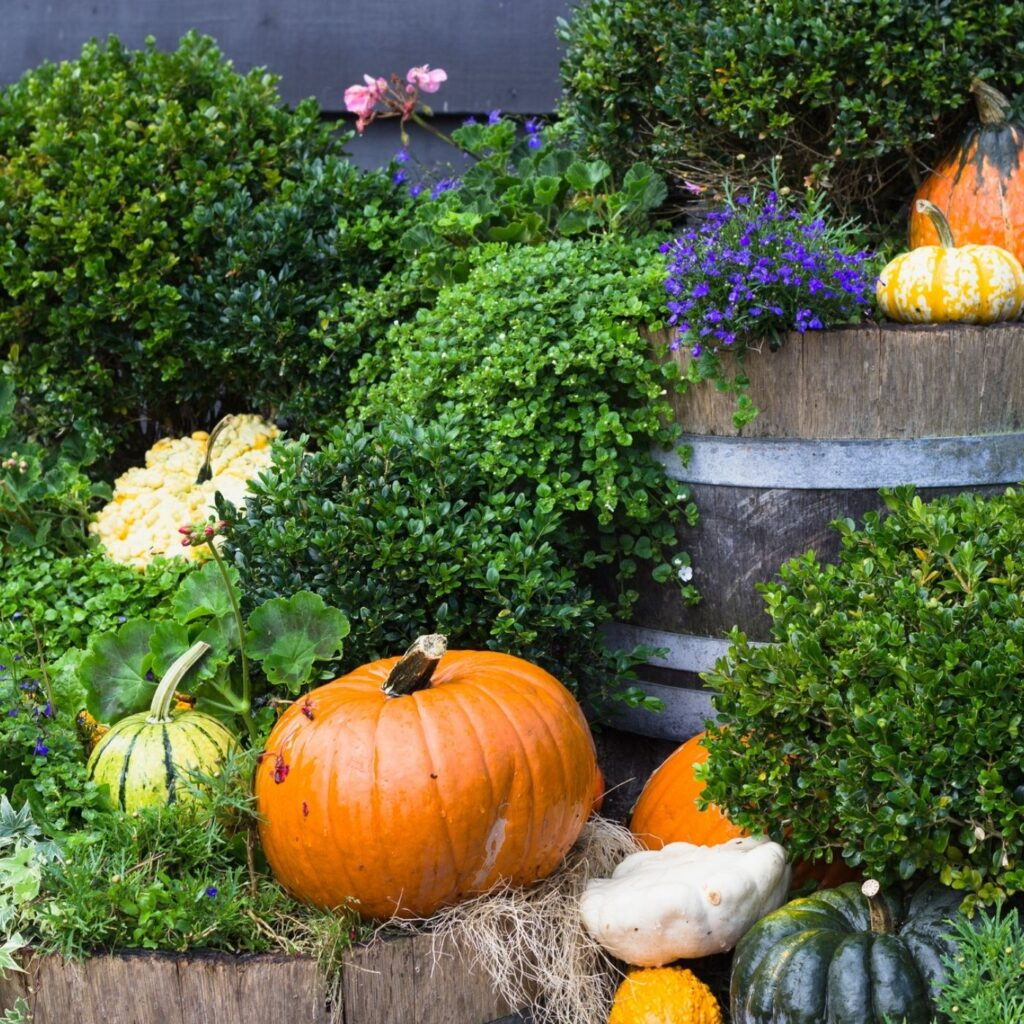 Autumn Decorating with Gourds and Pumpkins - Outdoor Planters with Pumpkins and Gourds
