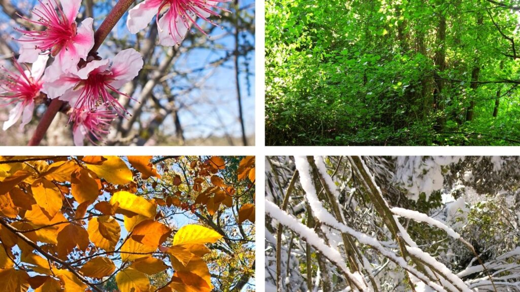 Simple seasonal living - four pictures of tree branches in all four seasons