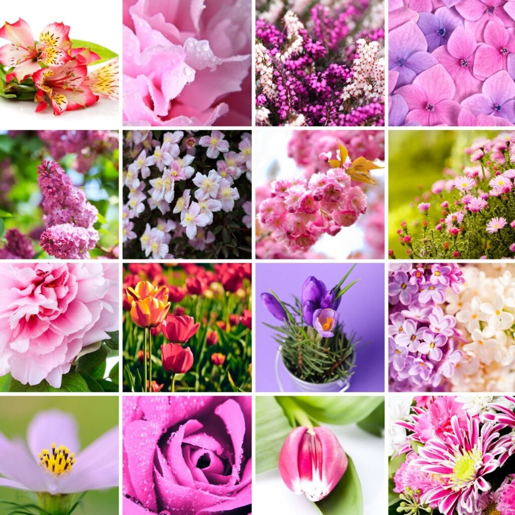 The 35 Best Cottage Garden Flowers - 16 squares of different types of cottage flowers