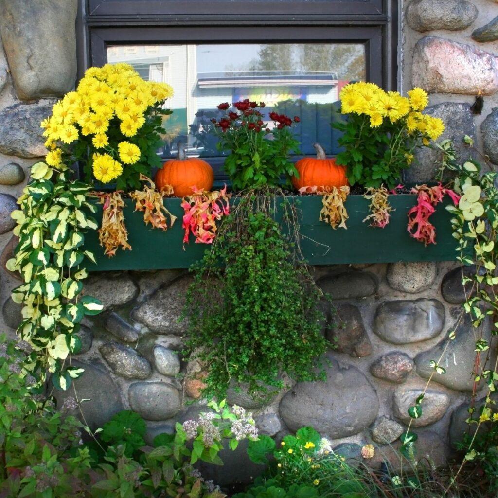 Window box with pumpkins, mums, and seasonal flowers