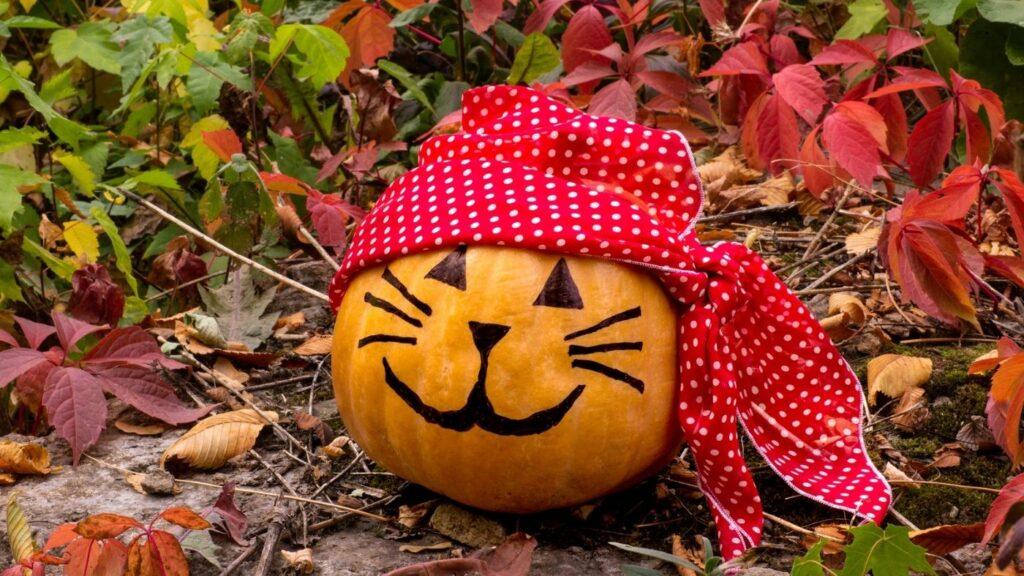 Cat Pirate Pumpkin - Idea for Halloween Decor